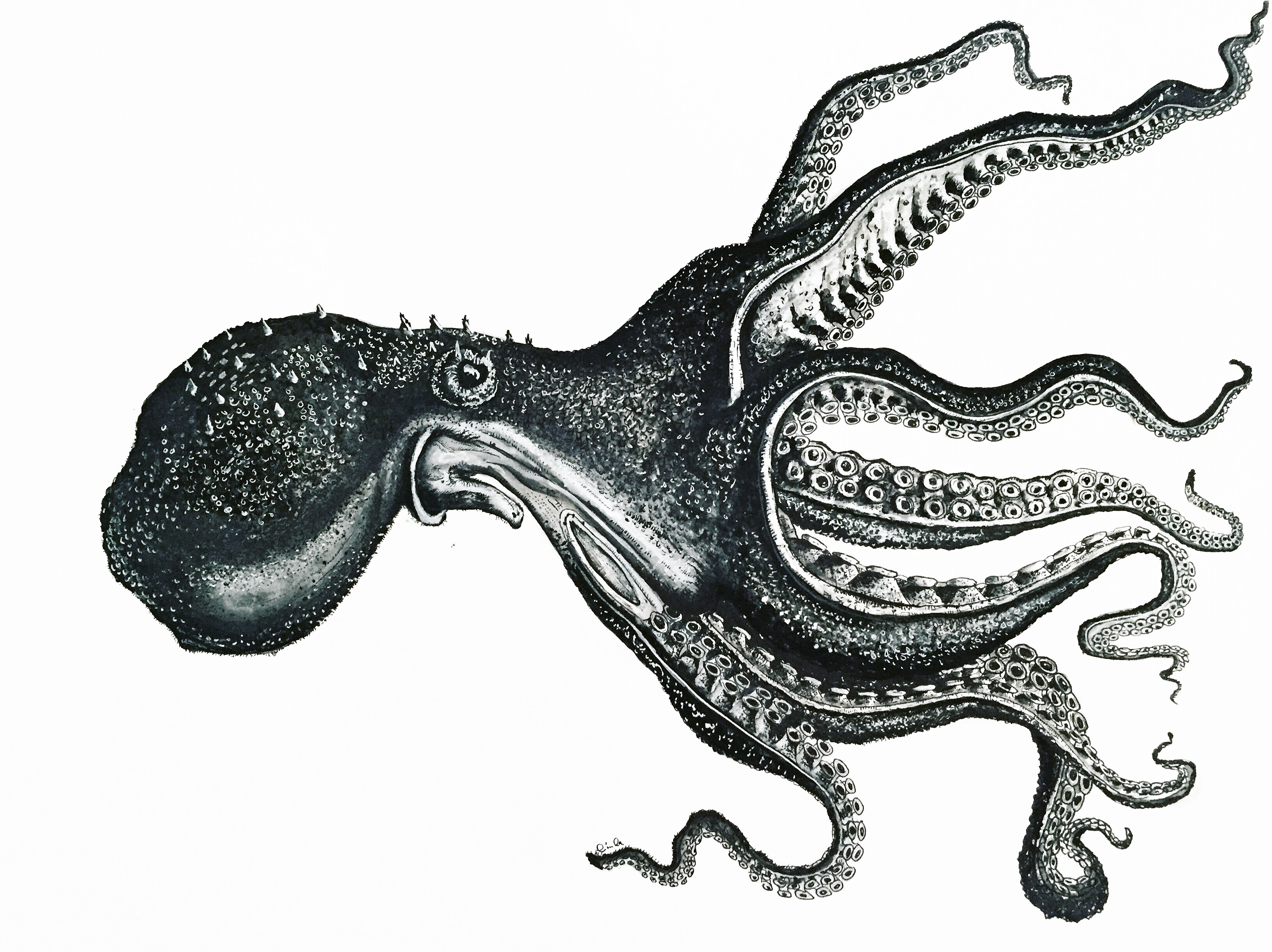 Octopus 2 by LCB